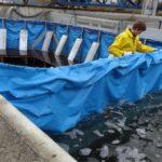 AquaWand bietet effizienten Hochwasserschutz (DBU-Beitrag)